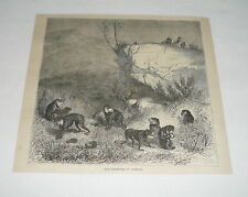 1879 magazine engraving ~ Ape Trapping In Africa