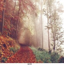 Mönch im Wald Bild auf Leinwand// 60x100cm// 1001