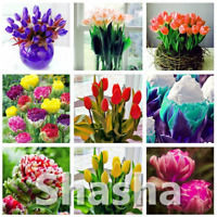 100 PCS Seeds Mini Bonsai Tulip Flowers Plants Garden Free Shipping 2019 Rare N