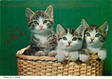 Picture Postcard~ Cats, Kittens, Three Of A Kind