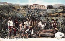 Portugal postcard Madeira Apanha de Cannas