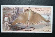 EAGLE RAY     Devil Fish     Vintage Card  # VGC
