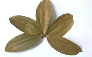 Ceylon Cinnamon 100 Dried Leaves Organic A Grade Natural Herbal Premium Quality