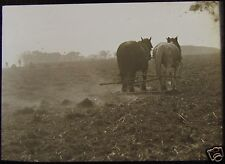 Glass Magic Lantern Slide FARMERS BURNING TWITCH NO2 C1900 PHOTO KENT ? HORSES