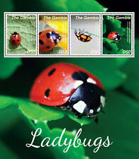 Gambia-2014-Insects- Ladybugs