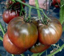 100 Tomato Seeds Black Russian Tomato Heirloom Tomato Seeds