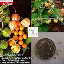 25 GOOSEBERRY, CAPE-GOLDEN NUGGET SEEDS(Physalisi peruviana);Sweet Edible Fruit