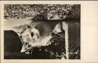 Kitten Kitty Cat on Window Lodge German Real Photo Postcard