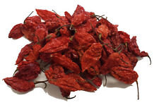 Naga Bhut Jolokia Chilli Pepper (Ghost Pepper) - CHILLIESontheWEB