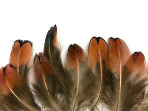 50 Feathers - Laced Heart Ringneck Pheasant Plumage Feathers Craft Fly Tying