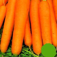 Möhren Karotten Nantes3 mittelfrüh zart saftig süß Karotte 3000 Samen Nr.165