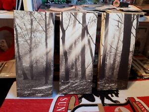 Set Of 3 Pictures Canvas Wall Art Forest Scenes