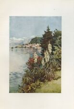ELLA DU CANE Watercolour Plate Print from an Antique Book