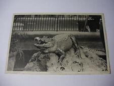 K226 - 1905 ALIGATOR - ZOO SERIES No5195 POSTCARD & Stamp