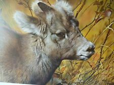 Mountain Baby Bighorn  Sheep 1990 Limited Edition Print Carl Brenders