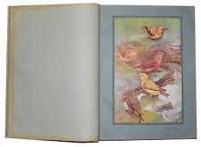 Les oiseaux de chez nous.135 reproductions d'aquarelles Léon Paul Robert in fol
