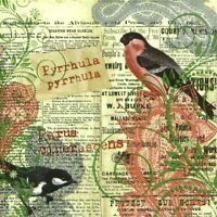 4x Paper Napkins for Decoupage Decopatch Craft Robin