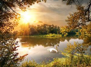 VLIES Fototapete-SCHWAN IDYLLE-(1006V)-See Fluss Teich Park Wald Natur Pflanzen