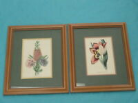 PAIR of  FRAMED ANTIQUE HAND PAINTED BOTANICAL PRINT