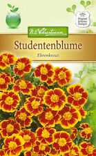 Studentenblume 'Ehrenkreuz' - Tagetes patula, Samen 5258