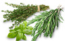Lot de graines aromatiques - 10 variétés en sachets individuels - KITSEB001