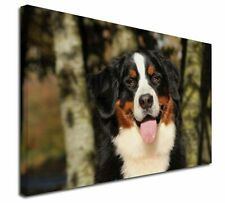 More details for bernese mountain dog x-large 30