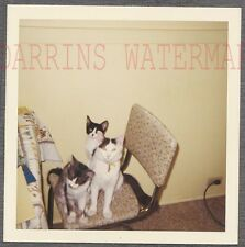 Vintage Snapshot Photo 3 Cute Pet Cats on Chair in Kitchen Interior 728045