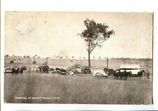 Wagga Wagga Farming c.1906