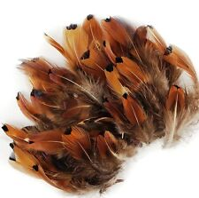 100 Pcs PHEASANT PLUMAGE; GOLD HEART Ringneck Feathers 1-3