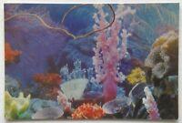 Aquarium of Noumea The Wonders of the Aquarium Postcard (P327)