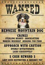 "Bernese Mountain Dog Wanted Poster Fridge Dog Magnet Large 3.5"" X 5"" #2"
