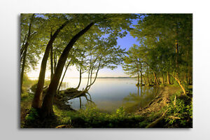 LARGE CANVAS WALL ART PEACEFUL CALM GREEN FOREST LAKE BEAUTIFUL NEW PRINT A0 A1