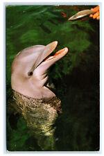 Postcard Feeding Porpoise/Dolphin at Seaquarium, Miami, Fl 1960's B42