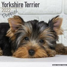 Yorkshire Terrier Puppies Calendar 2022 Dog Breed Wall PUPPY 15% OFF MULTI ORDER