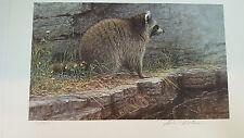 Robert BATEMAN print Distant Danger Raccoon AP 31/1600