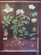Große Schulwandkarte Rollkarte Kartoffel Jung Koch Quentell Print 1957