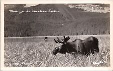 Moose in Canadian Rockies Alberta AB RPPC Tom Johnston Real Photo Postcard D39