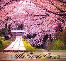 (8) Japanese SAKURA FLOWERING CHERRY Tree Seed - Prunus serrulata Seed- Comb S&H