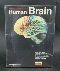 Vintage Lindberg Human Brain 3D Scale Model Kit