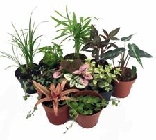"Terrarium & Fairy Garden Plants - 10 Plants in 2"" Pots"