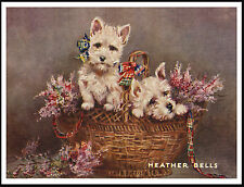 WESTIE WEST HIGHLAND WHITE TERRIER MUM AND PUPS HEATHER BELLS DOG PRINT POSTER