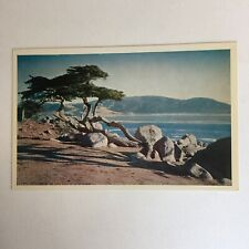 Monterey Cypress On 17 Mile Drive Blue Carmel Bay Unposted Postcard