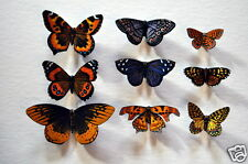 Butterfly Magnets Set of 9 Insects Multi Color Refrigerator Magnets Gifts