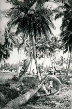 TAHITI c. 1960 - Cocotier - T3