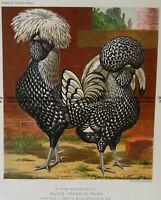 Antique Print 20-425 Poultry by L Wright c.1880 Birds