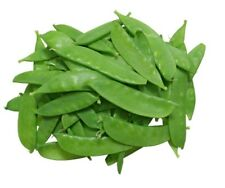 SNOW PEA ORGANIC 10+ seeds winter vegetable garden hardy EASY TO GROW snowpea