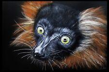 Red-Ruffed Lemur on Canvas - Madagascar Africa - Endangered Species Monkey 16X24