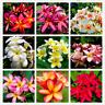 20 PCS Seeds Multiple Color Frangipani Plumeria Rubra Flowers Bonsai Home Garden