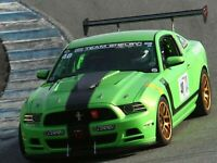 Team Shelby Racing Window Banner