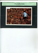 P841 # MALAYSIA USED PICTURE POST CARD * OIL PALM